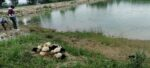 Yeşil Göl'e Ördek Yavruları Bırakıldı