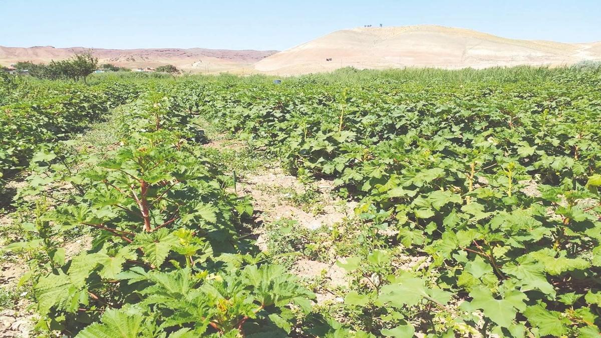 Aydoğan Köyünde Organik Ürün Hasadı Başladı