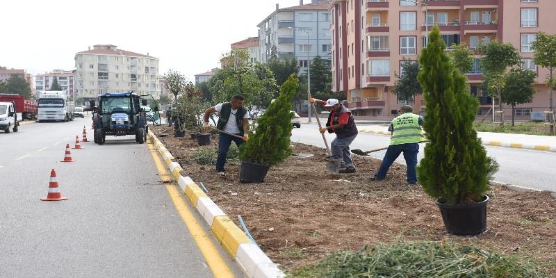 Belediye Çorum'u Ağaçlandırmaya Devam Ediyor