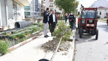 Belediye Ağaçları Toprakla Buluşturuyor