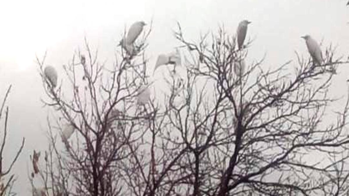 Sungurlu Göçmen Kuşların Uğrak Noktası Oldu